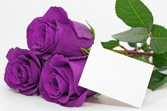 flores_moradas